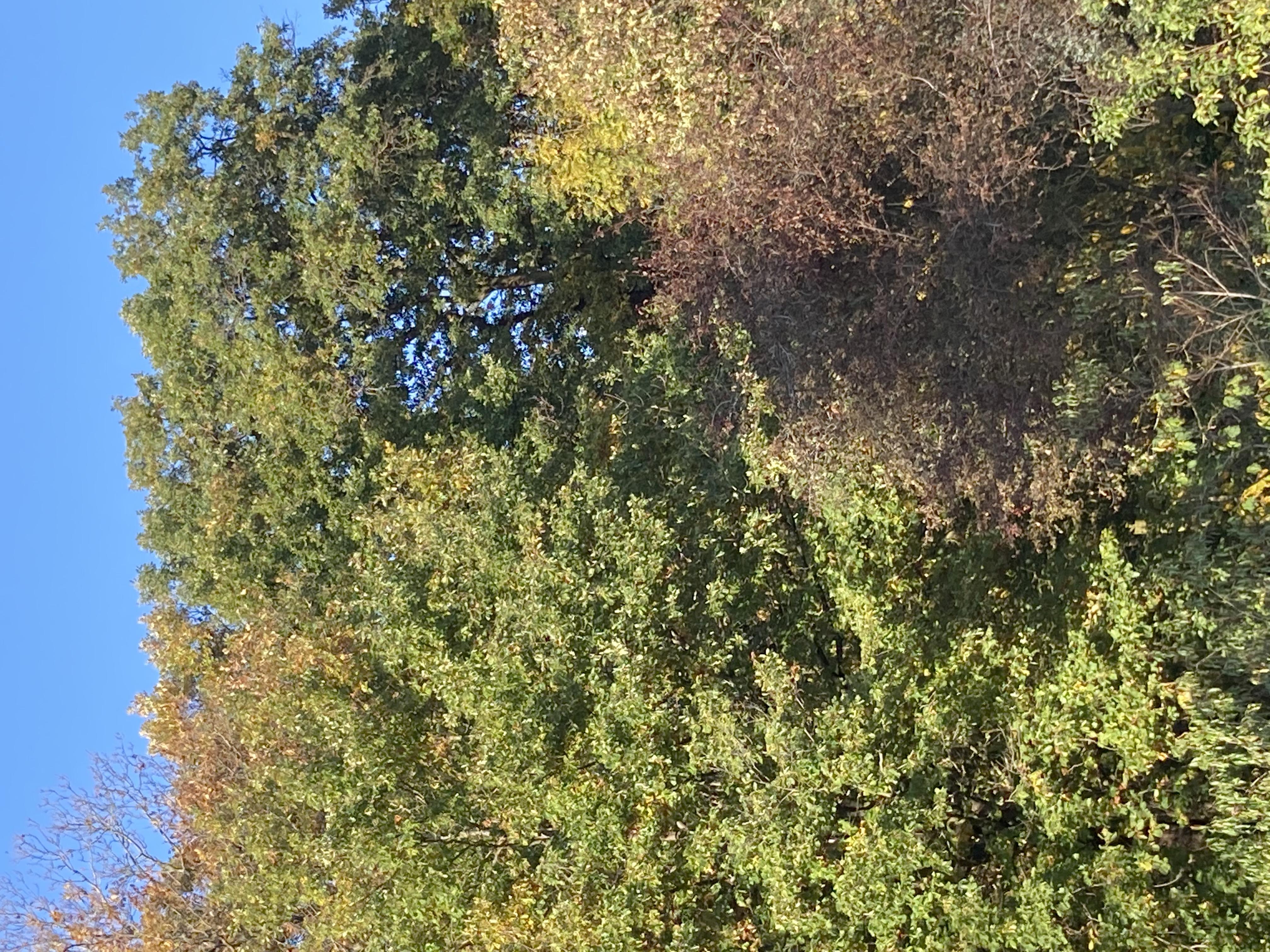 arbres en automne vus de la fenêtre