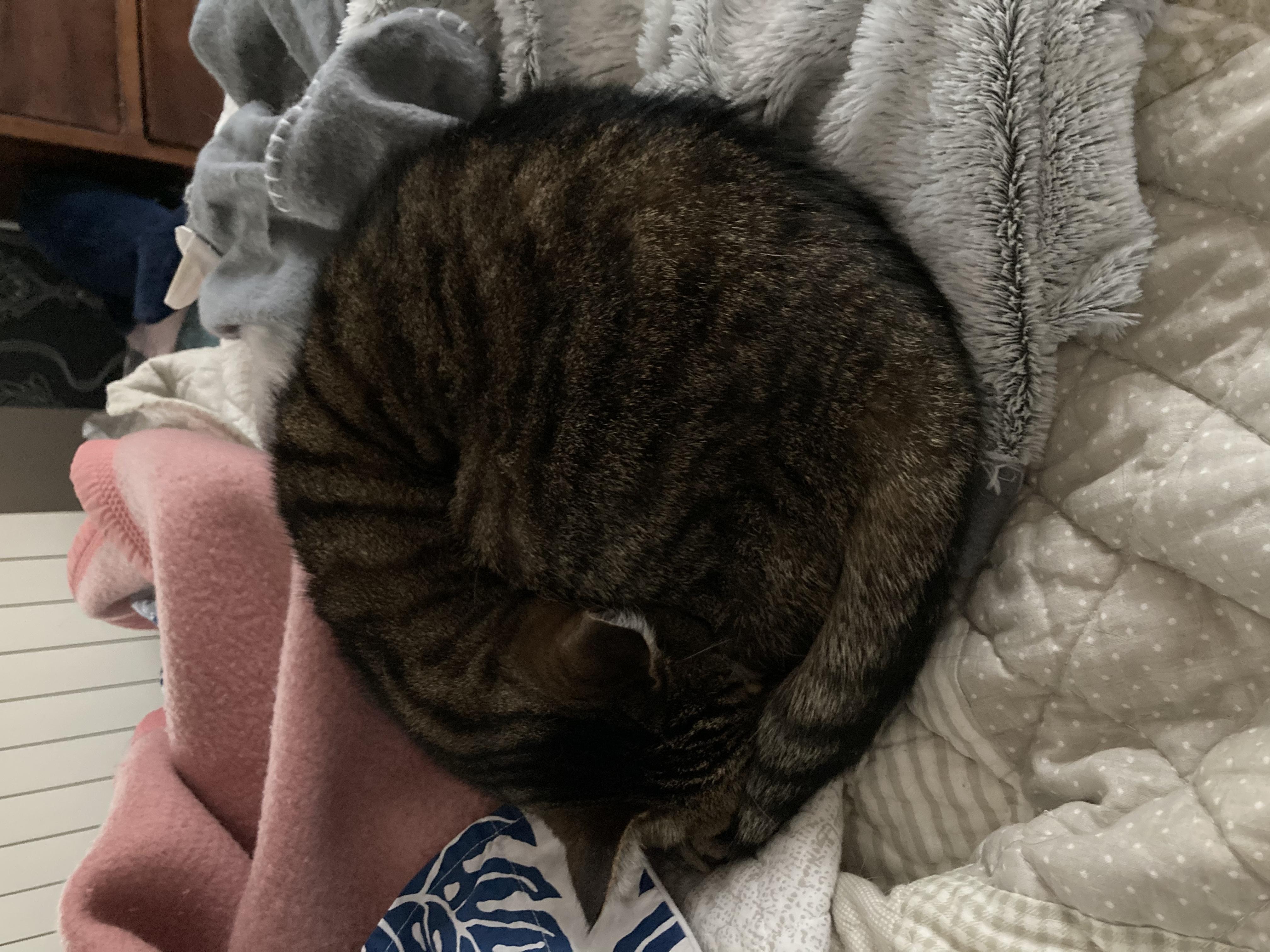 chat en boule sur un lit